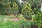 Perennial Landscape Large Tree Installation